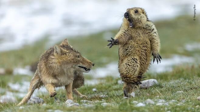 시민들이 뽑은 최고의 야생동물 사진1.jpg