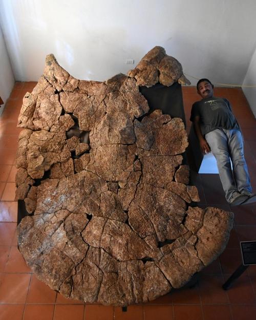 승용차만한 초대형 고대 거북도 공룡급 악어가 천적3.jpg