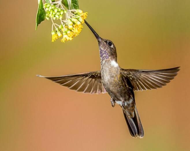 맛있는 꿀 따먹기 위해 벌새는 밤이면 기절한다.jpg